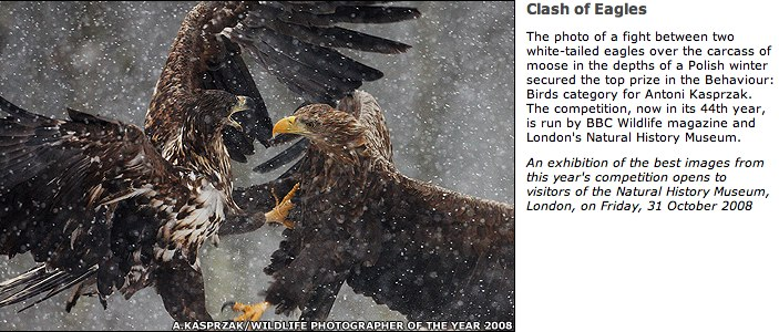 BBC NEWS | In pictures _ Wildlife Photographer of the Year, Clash of Eagles.jpg